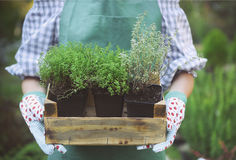 Woman holding a box with plants in her hands in garden center Royalty Free Stock Photography
