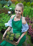 Woman holding a box with plants in her hands in garden center Stock Image