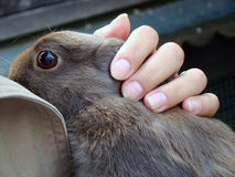 A woman holding a brown Rabbit in her hands Royalty Free Stock Image
