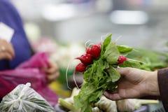 Woman holding bunch of radish Stock Photos