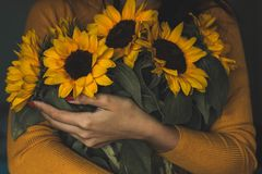Woman Holding Bunch Of Sunflowers stock images