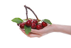 Woman Holding Cherries Stock Photos