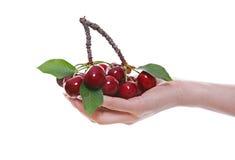 Woman Holding Cherries Stock Photos