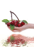Woman Holding Cherries Royalty Free Stock Photo