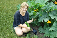 Woman holding  courgette in vegetable garden Royalty Free Stock Photo
