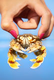 Woman holding crab Stock Image