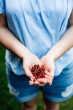 Woman holding cranberries in her hands. royalty free stock images