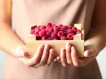 Woman holding crate full of fresh raspberries. Closeup Stock Photography