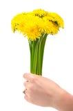 Woman holding dandelion flowers Royalty Free Stock Photos