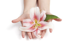 Woman Holding Delicate Pink Lily Stock Photo