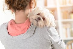 Woman holding a dog. Woman holding a cute white Maltese dog on his shoulder Royalty Free Stock Image