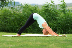 Woman holding a downward facing dog pose Royalty Free Stock Photo