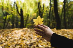 Woman holding fallen leaf Royalty Free Stock Photos
