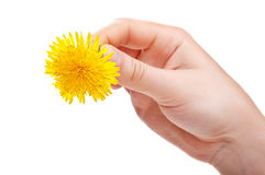 Woman holding flower Stock Images