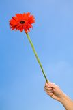Woman holding flower against blue sky Royalty Free Stock Photo