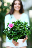 Woman holding flower in a pot. Royalty Free Stock Photo
