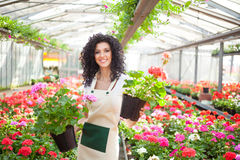 Woman holding flower pots. Beautiful woman holding flower pots Royalty Free Stock Image