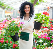 Woman holding flower pots Royalty Free Stock Photos