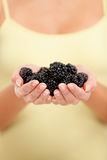 Woman holding fresh blackberries in hands closeup Royalty Free Stock Image