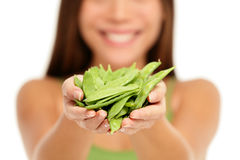 Woman holding fresh green snow peas in hands. Woman holding fresh Asian snow peas in hands closeup isolated on white background. woman showing handful of green stock image
