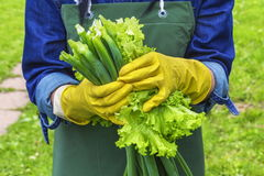 Woman holding fresh lettuce leaves and spring onions Stock Images