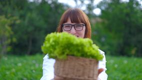 Woman holding fresh lettuce leaves, standing in the vegetable garden.  stock footage