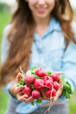 Woman Holding Fresh Radishes Royalty Free Stock Images
