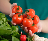 Woman holding fresh tomatoes Royalty Free Stock Image