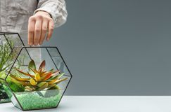 Green interior design. Home greenery hobby concept. Woman holding geometric florarium vase with mini succulent garden. Home greenery hobby concept stock images