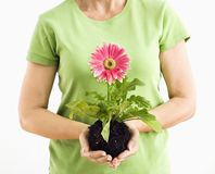 Woman holding gerber daisy. Royalty Free Stock Image
