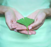 Woman holding Ginkgo biloba leaf in her hands Stock Photography