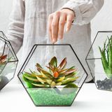 Florariums on table. Home gardening hobby concept. Woman holding glass geometric florarium vase with mini succulent garden and two florarium vases at table. Home royalty free stock images