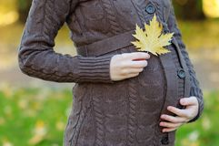 Woman holding hands with maple leaf on her pregnant belly Royalty Free Stock Photo