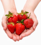 Woman holding in hands ripe fresh strawberries isolated on white. Royalty Free Stock Image
