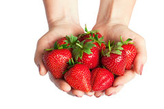Woman holding in hands ripe fresh strawberries Royalty Free Stock Image