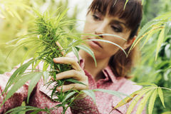 Woman holding hemp flowers Royalty Free Stock Images