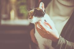 Woman holding her cats pet in hand. Close up. royalty free stock photo