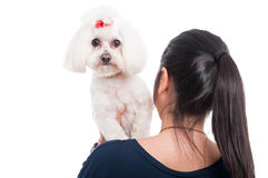 Woman holding her dog on the shoulder Stock Photography