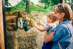 Mother and son watching tiger. Woman holding her son and watching tiger at the zoo on warm and sunny summer day.Mother and son watching tiger through the window royalty free stock photography
