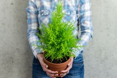Woman holding a houseplant royalty free stock photography