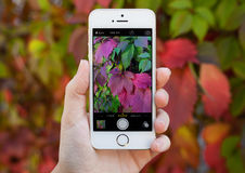 Woman holding iPhone 5S with Instagram on the screen Stock Photo