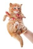 Woman holding kitten Royalty Free Stock Photos