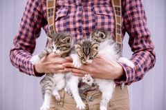 Woman is holding kittens Stock Image