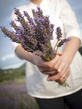 Woman holding lavander flowers Royalty Free Stock Images