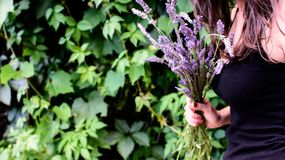 Woman holding lavender flowers in hand Stock Photos