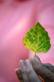 Woman holding leaf Stock Photos