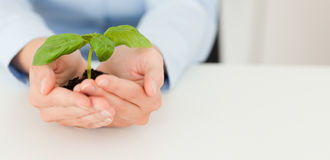 Woman holding a little plant Royalty Free Stock Photos