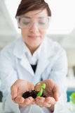 Woman holding a little plant with soil Royalty Free Stock Photo