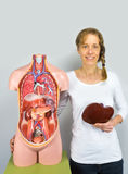 Woman holding liver at body near torso Stock Images