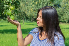 Woman holding and looking at pears in orchard Royalty Free Stock Image